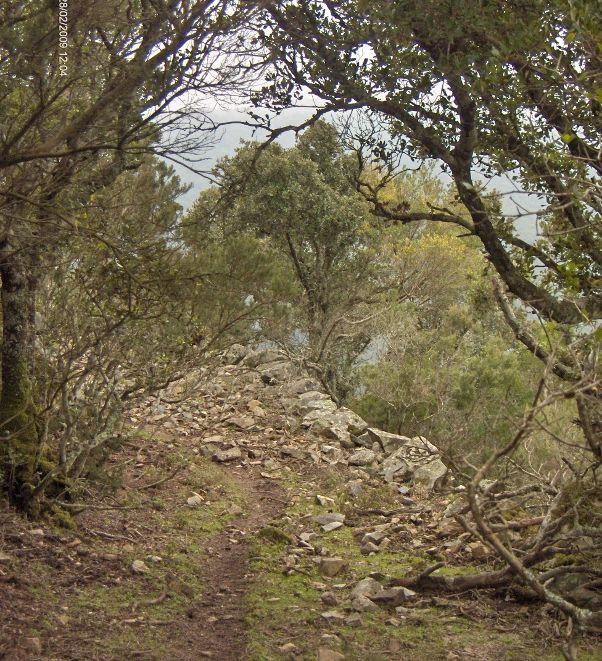 """#Castiadas (CA): #Escursione Notturna nella Foresta di """"S'ACQUA CALLENTI"""" - #EventiVerdiSardegna Considerando il gran caldo previsto per il prossimo fine settimana, per non rinunciare a camminare, Alla Scoperta di.. organizza la passeggiata al calar del Sole, benchè la Luna sia ormai calante. Il percorso nella Foresta di S'Acqua Callenti (Castiadas) consentirà di ascoltare il #Bramito dei #Cervi Maschi, di avvertire la loro presenza e forse di avvistarne qualcuno!"""