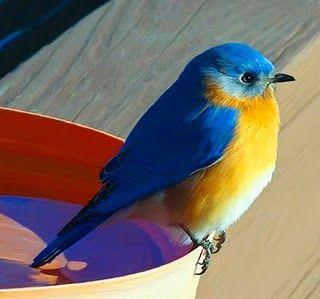 neon.: Birds Food, Little Birds, Cobalt Blue, Eastern Bluebirds, Backyard, Beautiful Birds, Blue Birds, Back Yard, Feathers Friends