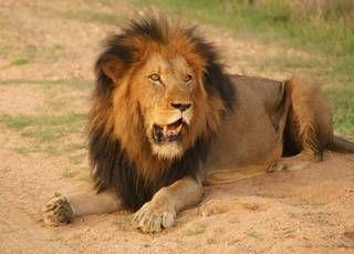 Pilanesberg National Park South Africa: Jenman African Safaris