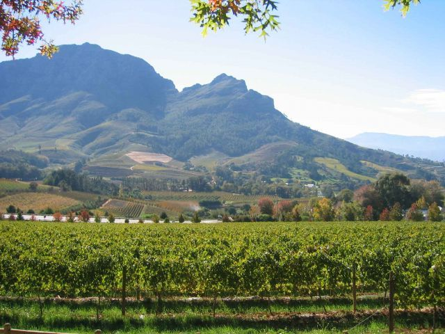 Chile, Chile vineyard