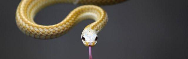3-jarig jongetje 'herinnert zich vorig leven als slang' - http://www.ninefornews.nl/3-jarig-jongetje-herinnert-zich-vorig-leven-als-slang/