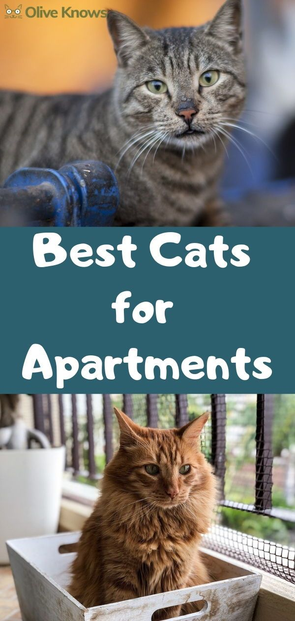 The Best Cats For Apartments Oliveknows Cool Cats Cat Apartment Cat Safety