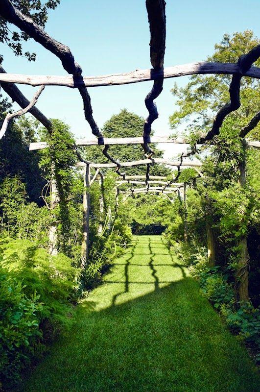111 best grape arbor images on pinterest | grape vines, growing