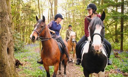 Les Ecuries de Brotonne à La Mailleraye-sur-Seine : Balade à cheval pour tous niveaux: #LAMAILLERAYE-SUR-SEINE 29.90€ au lieu de 40.00€…