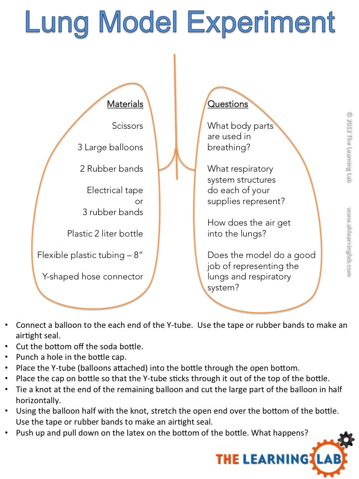 a study on the human digestive system biology essay Study guide for the next quiz  a digestive enzymes require a variety of  substrates  (a) identify the parts of the human digestive system indicated  below (2.