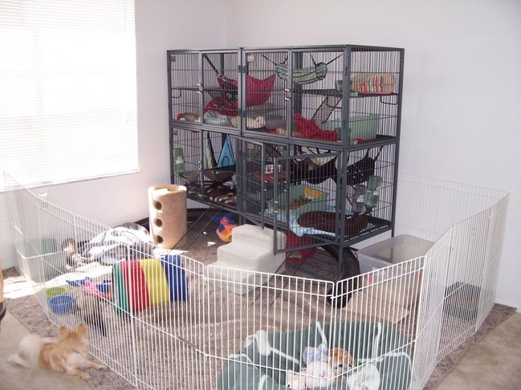 Very organized Ferret area. They have the cages to sleep, eat, drink & poo in but can also be let out to play in the ferret yard. :]
