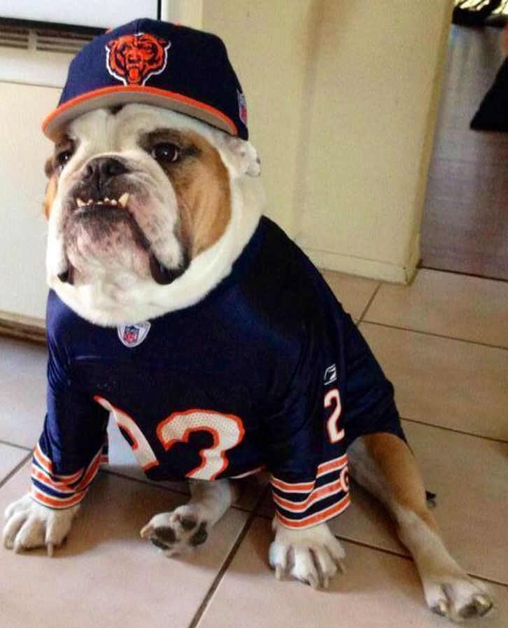 bulldog vs bears 17 best images about sportzzzzzzz on pinterest michael 6446