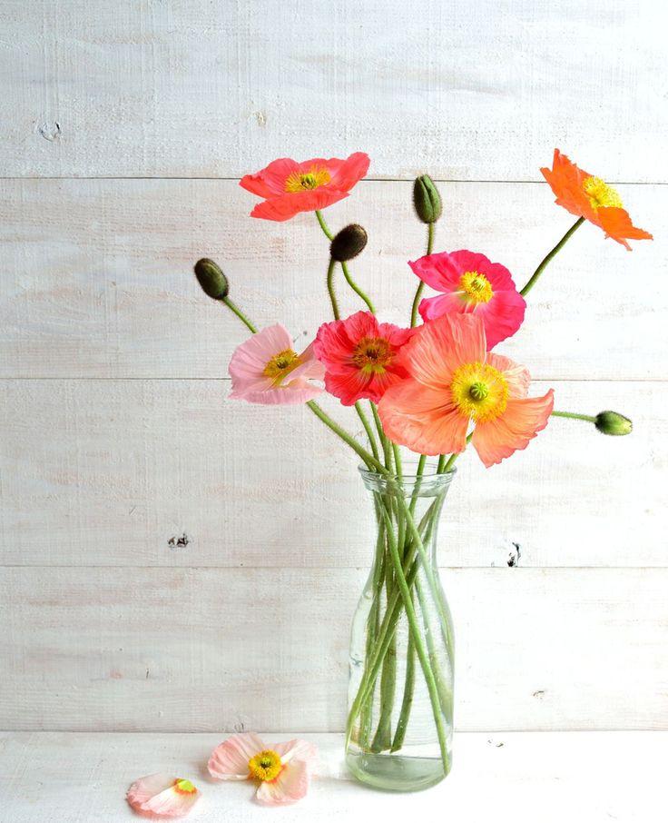Je wilt natuurlijk dat je bloemen zo lang mogelijk blijven staan. Wist je dat frisdrank helpt? En de koelkast handig is? Zo houd je je bloemen langer mooi. | Flairathome.nl #FlairNL