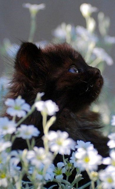 Black Kitty In The Meadow !