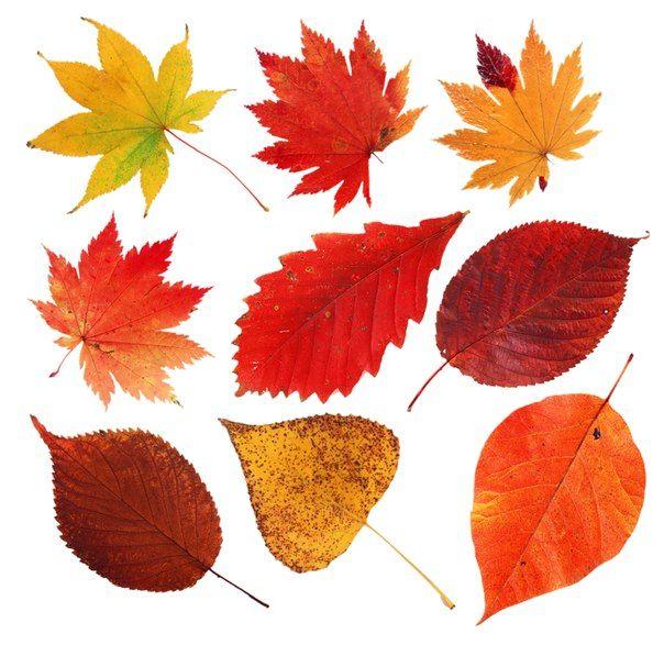 осенние листья картинка