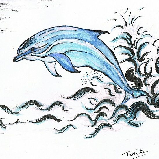 """Bottle nose Dolphin  Bottlenose dolphins are generalists and feed on a variety of prey items�""""endemic""""�to their habitat, foraging individually and cooperatively. Like other dolphins, bottlenose dolphins use high frequency echolocation to locate and pelagic squid and fish. Bottlenose dolphins employ multiple feeding of the water."""