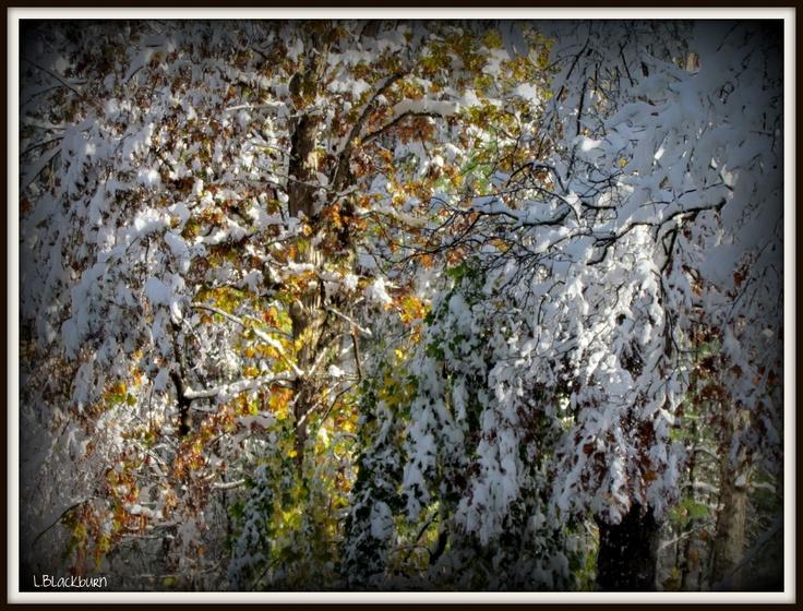 "snow ""fall"" Palmer MA October 2011"