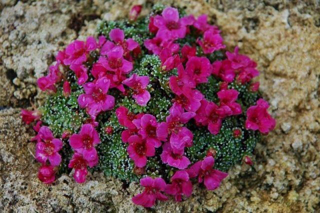 nunavut plants