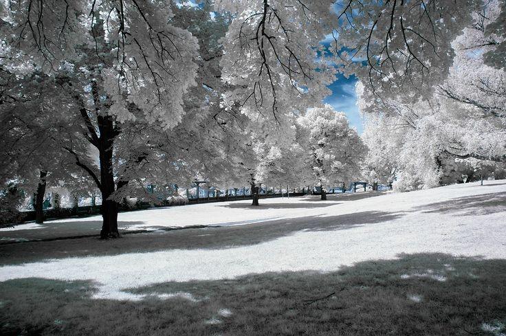 Winter, Snow, Trees, Park, Season, Nature, White, Cold