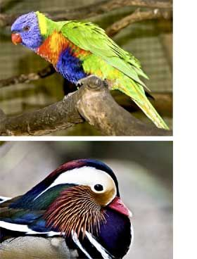 World of Birds, Cape Town, South Africa