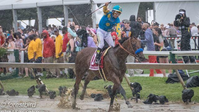 American Pharoah winning the Preakness Stakes 2015