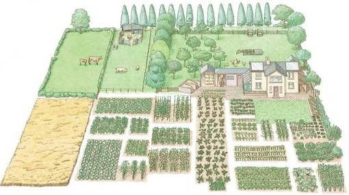 5 acre farm site plan | Your 1-acre homestead can be divided into land for raising livestock ...