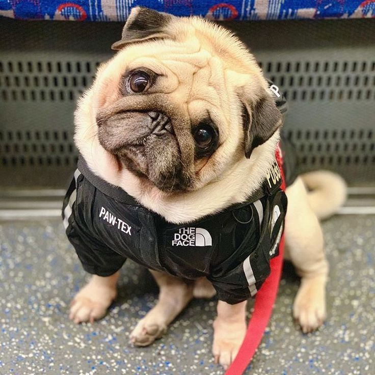 Puggy Smalls Where Shall I Ride This Train To Jacket By