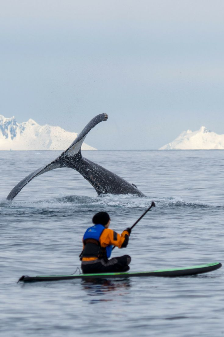 Paddleboarding in Antarctica: What to Expect