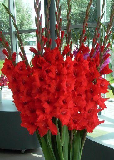 Mooi boeket gladiolen