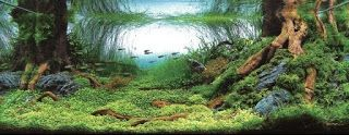 AQUARIUM SUPPLIES, ACCESSORIES AND EQUIPMENT: Aquarium Landscaping