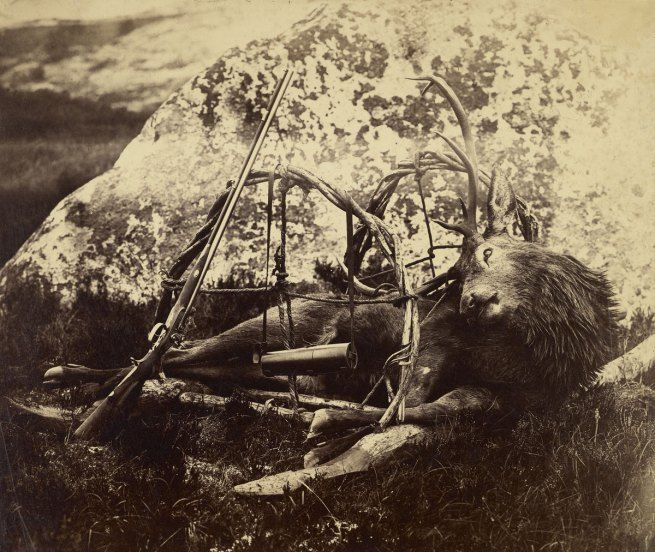 Exhibition: 'In Focus: Animalia' at the J. Paul Getty Museum, Getty Center, Los Angeles | Art Blart - Capt. Horatio Ross (British, 1801-1886) [Dead stag in a sling] c. 1850s – 1860s Albumen silver print 27.9 x 33.2 cm (11 x 13 1/16 in.) The J. Paul Getty Museum, Los Angeles