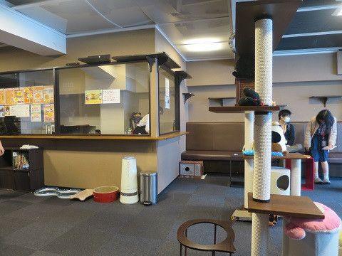 「猫カフェ きゃりこ 新宿店」の画像検索結果