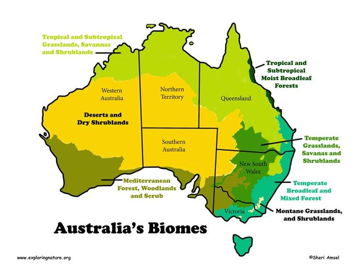 biomes of australia The freshwater biome covers roughly 20% of the earth and 08% of the total water on this earth lake baikal, in central asia, is the biggest lake on earth most lakes contain diverse species of plant and animal life.