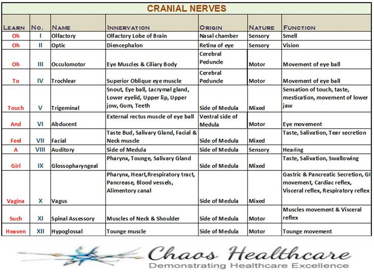 Learning the 12 Cranial Nerves | Posted by Eminem in Medical , Medical Coding on Aug 25th, 2012 ...