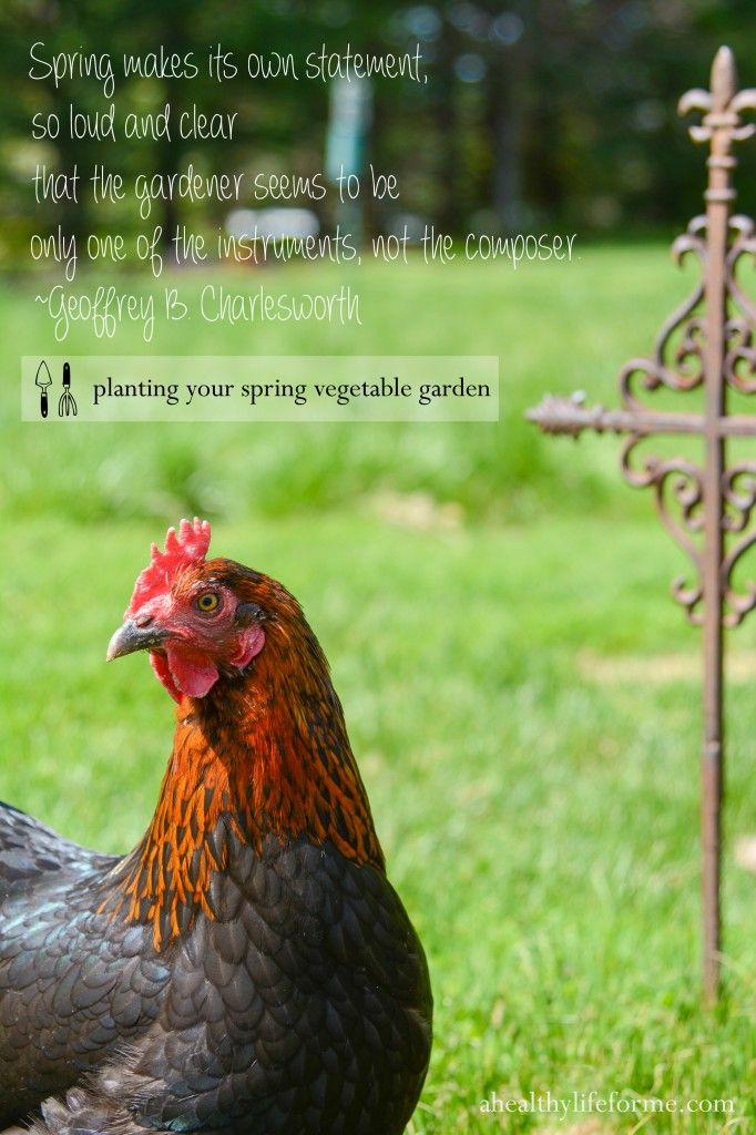 Chickens Vegetable Garden Part - 34: Planting Your Spring Vegetable Garden - A Healthy Life For Me