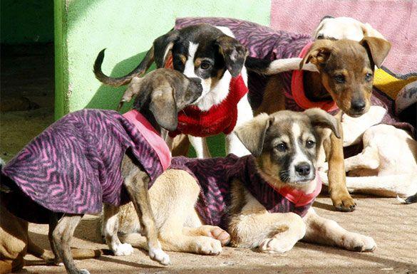Mais de 110 cães abandonados ganham proteção contra o frio em Apucarana (PR) - Mto amor pelos bichinhos! Parabéns para a Prefeitura de Apucarana, no Paraná, junto com a Sociedade Protetora dos Animais de Apucarana (Soprap) !! ♥