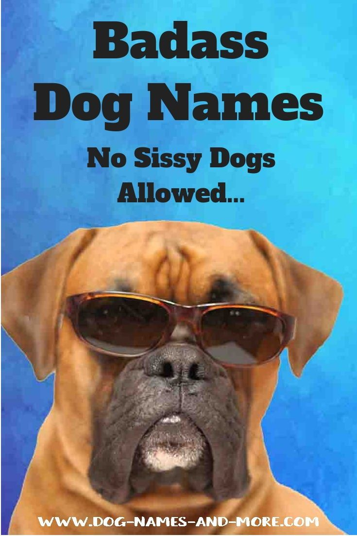Tough Dog Names Good For Guard Dogs Or Any Pup With Images