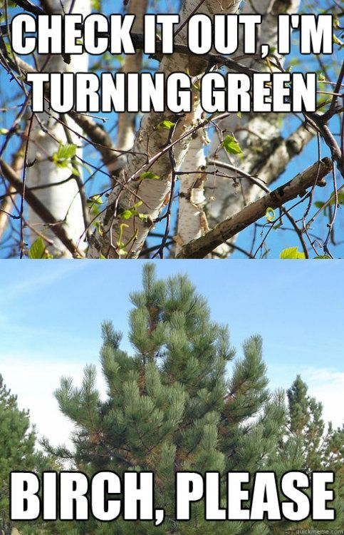 Tree humor haha.  People are really branching out with their jokes.  Don't like it?  Fine, just leaf me alone!