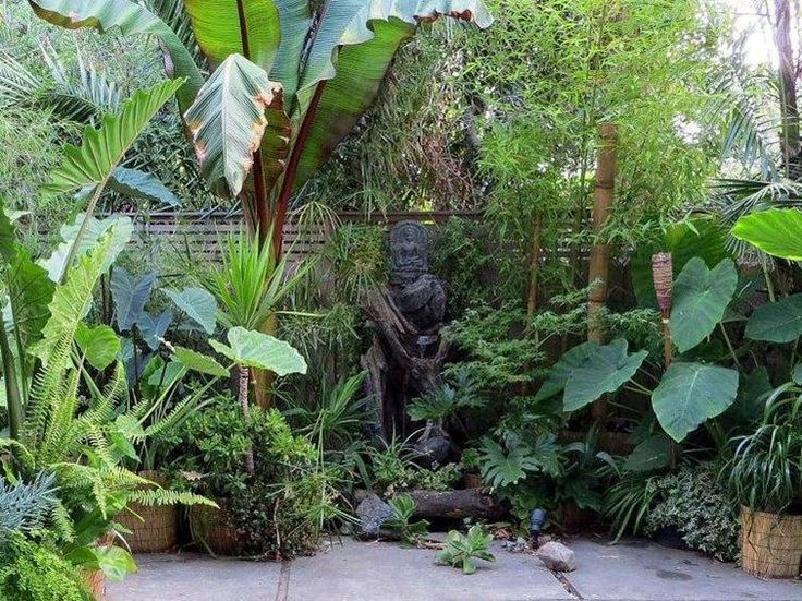 Best 25 small tropical gardens ideas on pinterest for Tropical garden design