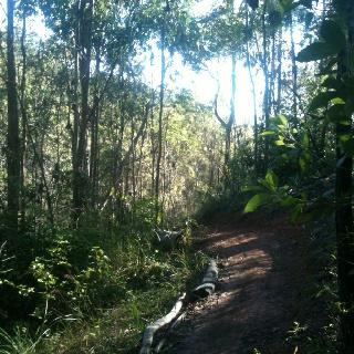 Part of the TURKEY MTB trail in Jubilee Park, Toowoomba