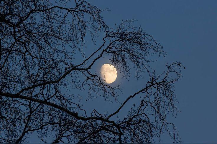 Zie de Maan Schijnt door de Bomen.....