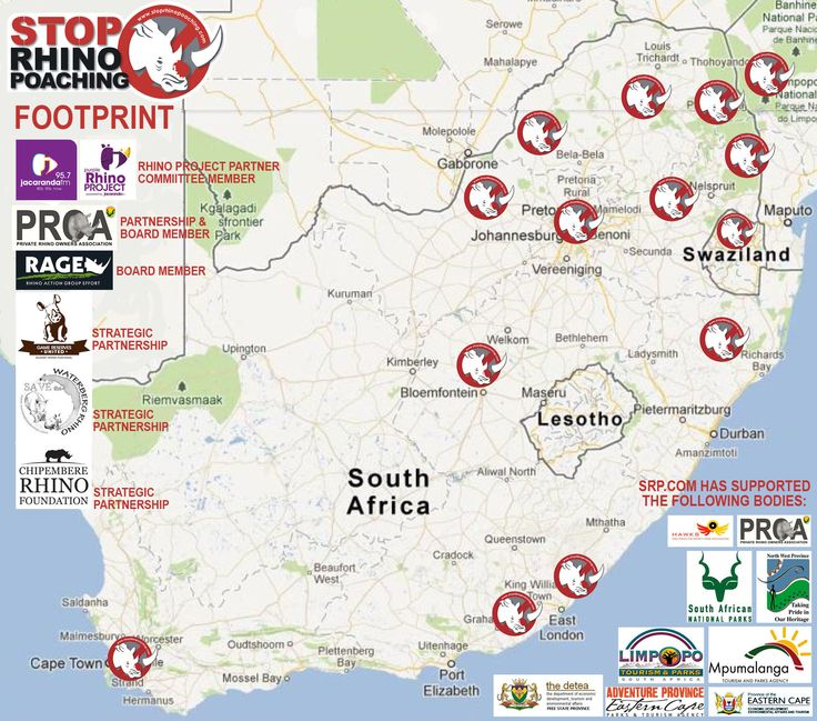 STOP RHINO POACHING NOW!