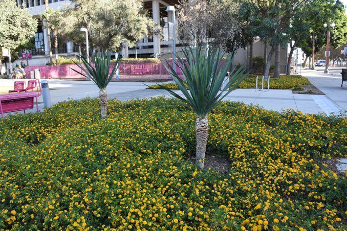 Grand Park Los Angeles Usa Park City Landscapearchitecture Design Losangeles Dtla Los Angeles Parks Los Angeles Landscape