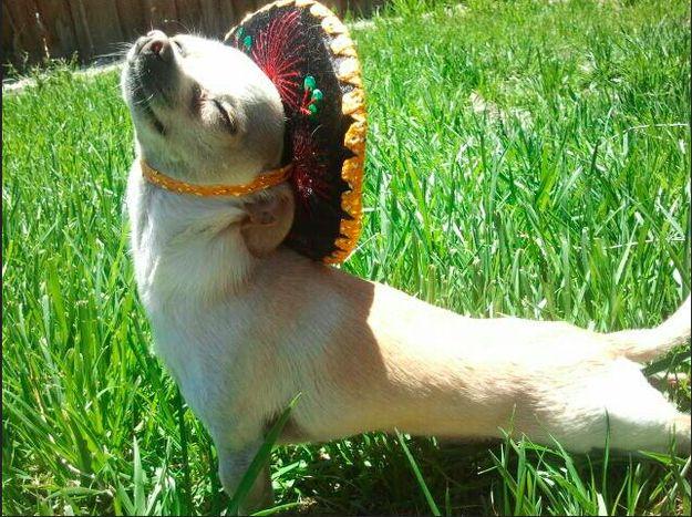 Rolig hatt fredag på chihuahua kontoret.