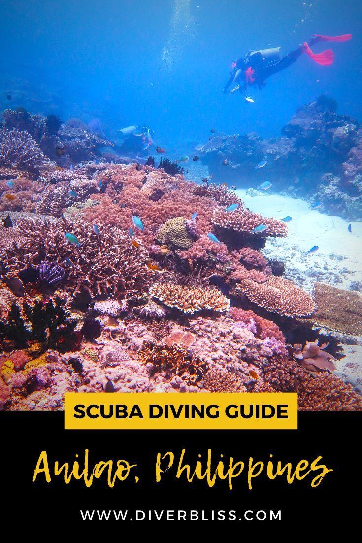 Scuba Diving In Anilao Batangas Philippines In 2020 Scuba Travel Scuba Diving Best Scuba Diving