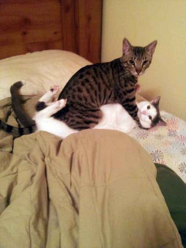 Cats Who Had No Idea You'd Be Home So Early #CoolPetZ #animals #cute #cat #cats and #dogs #pet #dog #awesome