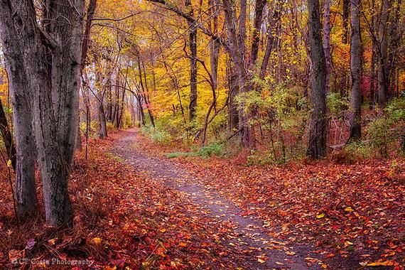 Autumn Path Nature Photography Print Woodland Pathway Forest Trail Fall Landscape Fall Theme Cottage Decor Landscape Photography Nature Autumn Landscape