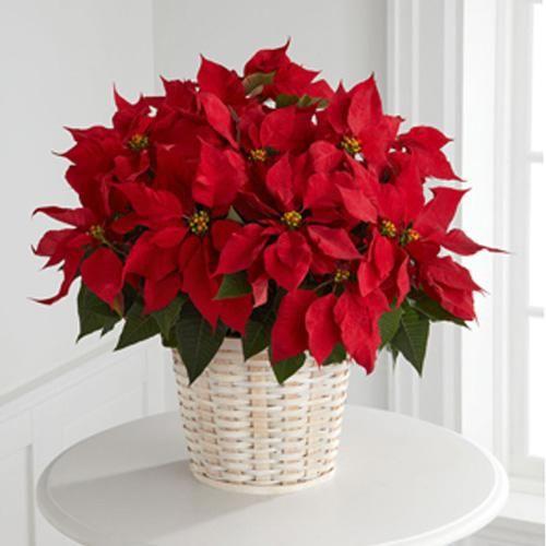 Para llenar de vida tus espacios, una canasta y muchas nochebuenas. #IdeasenOrden #Navidad #Decoracion