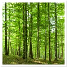 Today, planning a green funeral for a loved one is becoming increasingly popular and there are numerous eco-friendly options available. Green funerals are..