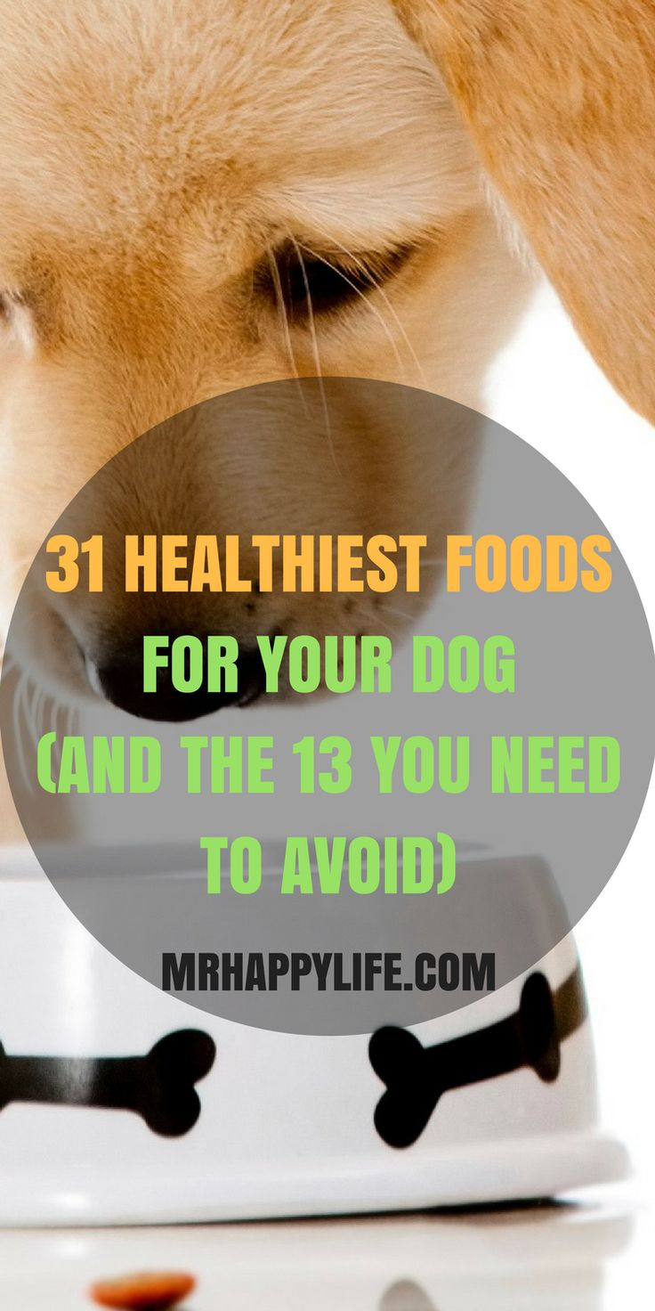For those of us who havedogs, we're always looking at ways to reward and pamper our pets. As we've all probably learned the hard way, though, we have to be careful with how we do so - as not all foods are good for dogs.