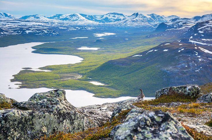 Vuoden luontokuva 2016: Kiiruna maailman laidalla.