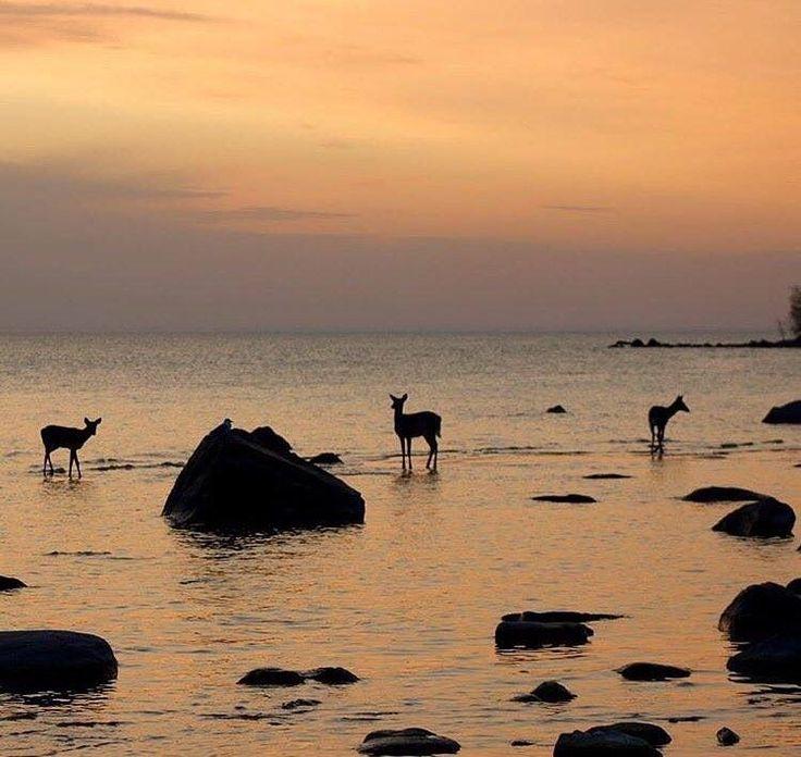 Deer at Victoria Beach ,Manitoba Canada by Instagram.com