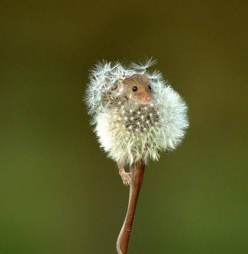 Cute mouse  - found the perfect hiding place, just don't sneeze!
