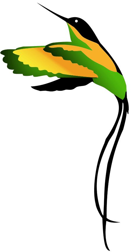 jamaican national bird clipart drawing - Google Search