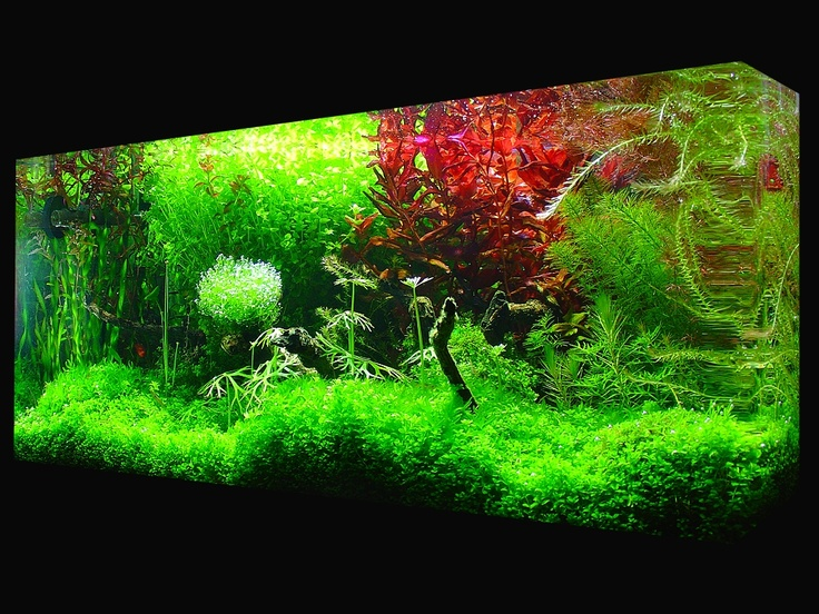 18 best tanks images on pinterest aquarium ideas for Snap on fish tank